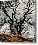 Bare Tree On The Hill Metal Print