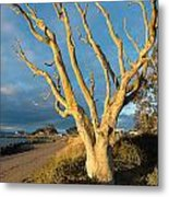 Bare Tree On The Spit Metal Print