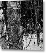 Bark And Trees In Winter Metal Print
