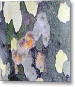Bark Beauty Metal Print