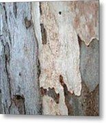Bark Of A Eucalyptus Tree Metal Print