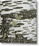 Bark Of Paper Birch Metal Print