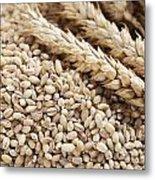 Barley Grains And Stalks Metal Print