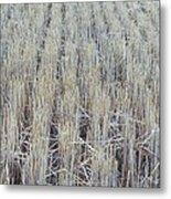 Barley Metal Print