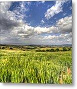 Barley View  Metal Print