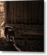 Barn Cat Metal Print by Theresa Tahara
