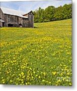 Barn In Dandelion Field Metal Print