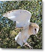 Barn Owl 2 Metal Print