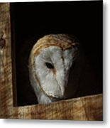 Barn Owl 5 Metal Print