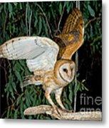 Barn Owl Alights Metal Print