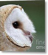 Barn Owl Closeup Portrait Metal Print