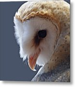 Barn Owl Dry Brushed Metal Print