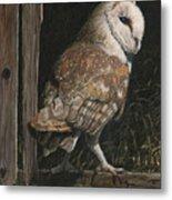 Barn Owl In The Old Barn Metal Print