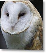 Barn Owl No.1 Metal Print