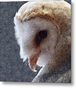 Barn Owl Painterly Metal Print