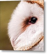 Barn Owl Profile Metal Print