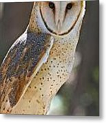 Barn Owl Raptor  Metal Print