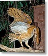 Barn Owl With Prey Metal Print