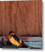 Barn Swallow Metal Print