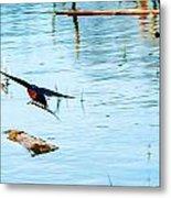 Barn Swallow In Flight Metal Print