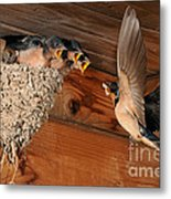 Barn Swallow Nest Metal Print