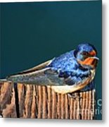 Barn Swallow Perching Metal Print
