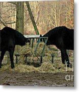 Barnyard Beauties Metal Print