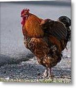 Barnyard Rooster Metal Print