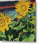 Barnyard Sunflowers Metal Print