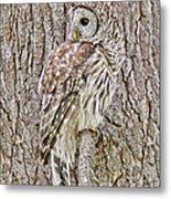 Barred Owl Camouflage Metal Print