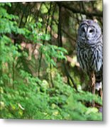 Barred Owl In Forest Metal Print