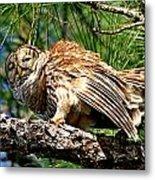 Barred Owl On Limb Metal Print