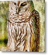 Barred Owl On Moss Metal Print