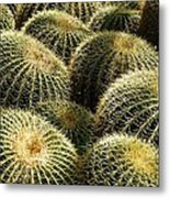 Barrel Cacti Metal Print