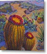 Barrel Cactus In Warm Light Metal Print