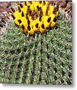 Barrel Cactus With Yellow Fruit Metal Print
