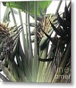 Barrilas Flower Metal Print