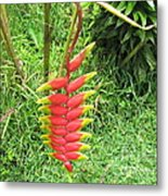 Barriles Heliconia Metal Print