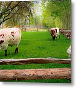Barrington Farm Bovine Metal Print