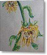 Bashful Sunflower Metal Print