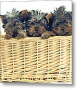 Basket Of Yorkies Metal Print