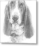 Basset Hound Pencil Portrait Metal Print