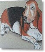 Bassett Puppy Metal Print
