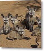 Bat-eared Fox Pups Metal Print