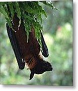 Bat In The Rain Metal Print