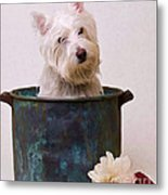 Bath Time Westie Metal Print
