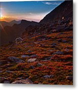 Bathing In Last Light Metal Print