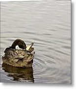 Bathing Time For This Goose Metal Print