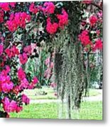 Baton Rouge Louisiana Crepe Myrtle And Moss At Capitol Park Metal Print
