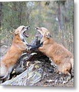 Battle For Dominance Metal Print